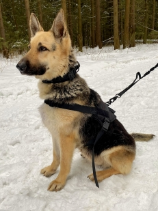 Прочный нейлоновый жилет для собак Molle Patrol K9 (черный)