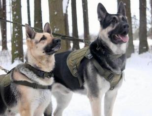 Тактический поводок для собак (хаки-олива)