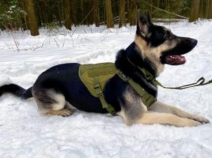 Жилет для дрессировки служебных и охотничьих собак Icefang Army Style Cobra (хаки-олива)
